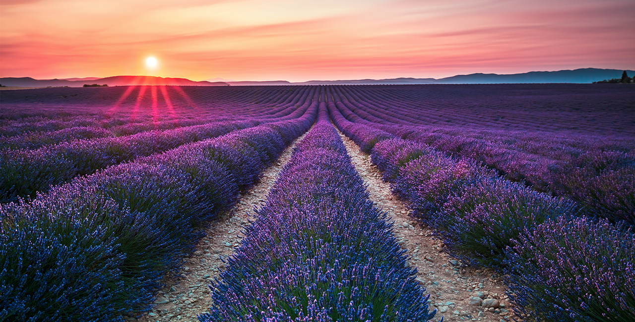 Purple field   Home Banner Slide   Joan Tibaldi LCSW, BC-TMH   Licensed Clinical Social Worker & Board Certified TeleMental Health Provider   Online Video Therapy in Florida   Online Counseling in New York   St. Augustine, FL 32084